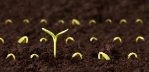 semilla a fruto